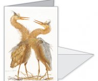 Egrets Notecard