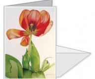 Sunburst Tulip