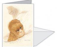 Como Park Orangutan