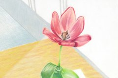 Tulip on Table