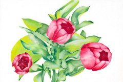 3 Garden Tulips
