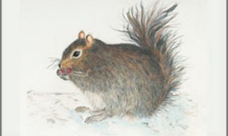 Resident Squirrel – Place Mat